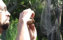 Captura y toma de muestras en aves silvestres de la Reserva Ecológica Costanera Sur