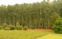 Jornada interinstitucional de difusión de plagas forestales en Tandil